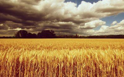 Co se děje s naším zdravím při masovém používání pesticidů?