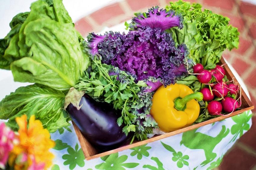 Jak si zajistit pravidelný přísun čerstvé lokální zeleniny vbiokvalitě a přitom ji nemuset shánět a běhat po spoustě obchodů